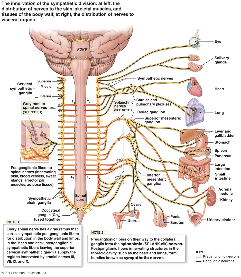 How To Identify And Treat Lumbar Plexus Compression Syndrome Lpcs